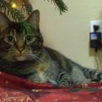 Cricket Laura's family's cat, under the Christmas tree