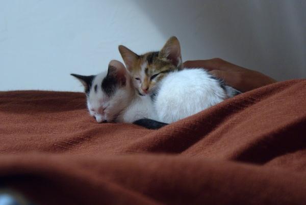 Duma and Nyalu